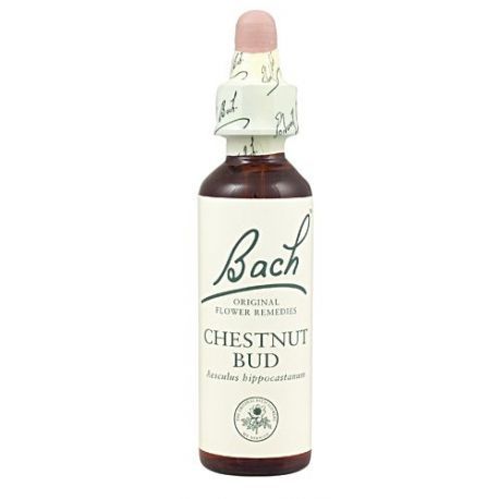 07 CHESNUT BUD 20 ML
